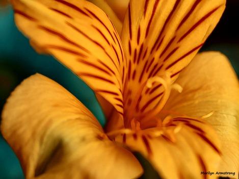 300-graphic-new-macro-bouquet-03172018_028