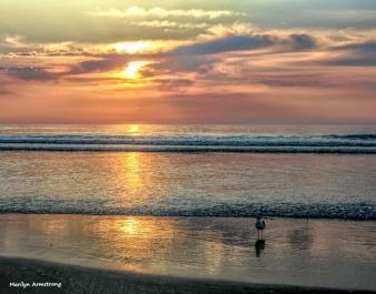 300-Gull-Sunrise-Ogunquit-07042013-001
