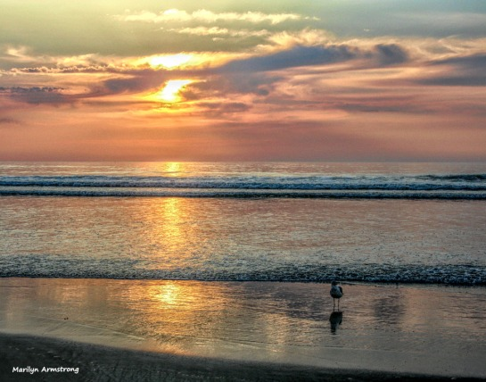 A gull at sunrise
