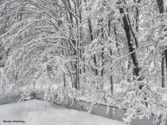 300-HDR-Trees-Heavy-Snow-MA-3-03132018_001