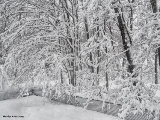 300-HDR-Trees-Heavy-Snow-MA-3-03132018_001