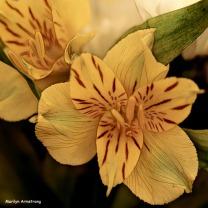 300-square-graphic-birthday-bouquet-03102018_034