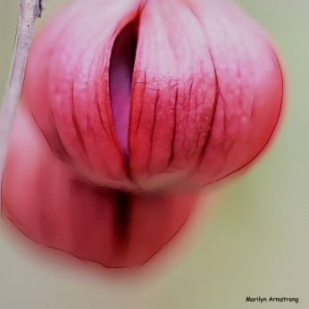 300-square-graphic-buds-last-fuchsia_001