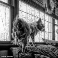 180-BW-Graphic-Duke-Dogs-Home-03262018_004