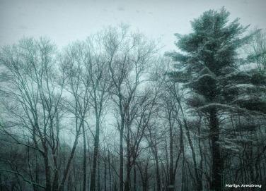 180-Fir-Trees-More-April-Snow-04062018_001