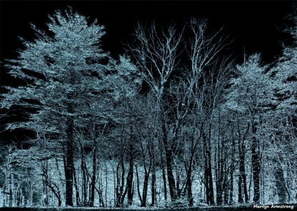 180-Reversed-Trees-More-April-Snow-04062018_022