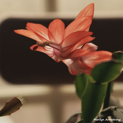 300-glow-final-cactus-flower-04292018_008