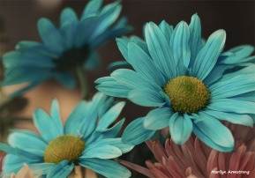 300-graphic-new-macro-blue-daisy-03172018_019