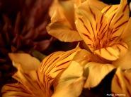300-graphic-new-macro-bouquet-03172018_037