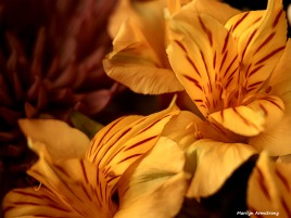 300-graphic-new-macro-bouquet-03172018_037