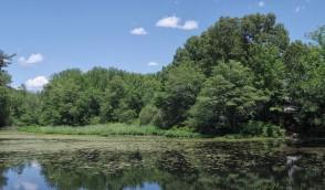 300-Whitins-Pond-MA-061516_092
