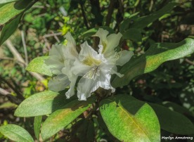 180-Paint-Rhododendron-Garden-05112018_065