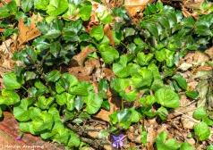 180-Sharp-Violets-Holly-05052018_028