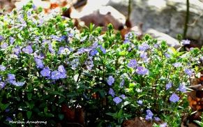 180-Soft-Violets-05052018_022