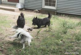 300-dogs-in-yard-gar-05182018_214