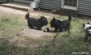 300-dogs-in-yard-gar-05182018_215