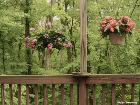 300-geranium-begonia-deck-05182018_011