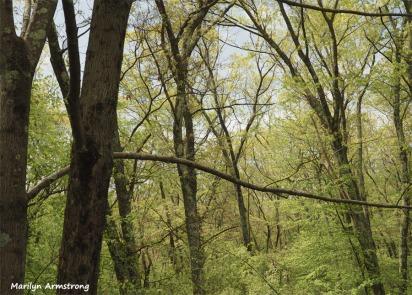 300-graphic-woodsy-05112018_005