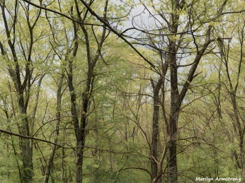 300-graphic-woodsy-05112018_010