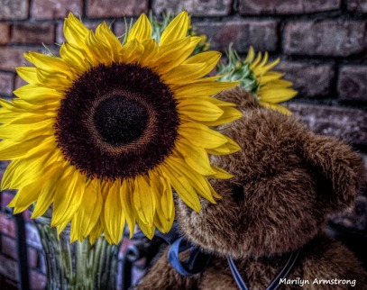 300-HDR-Sunflowers-05042018_003