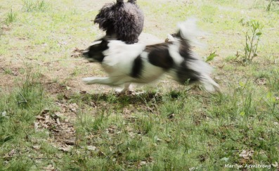 300-moving-dogs-180518_227