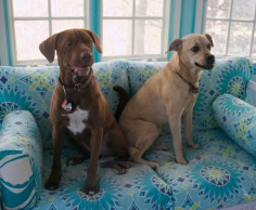 Dogs - Both on porch