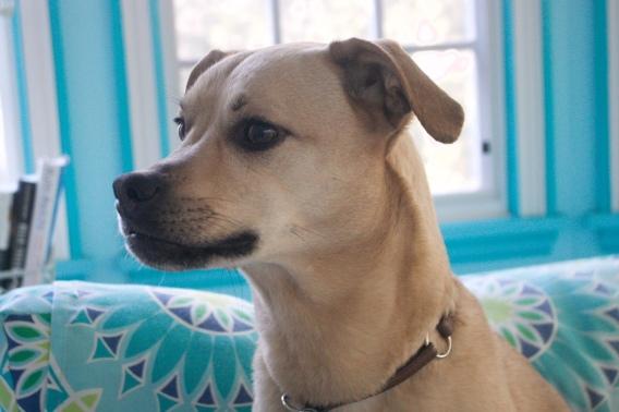 Dogs - Lexi port2