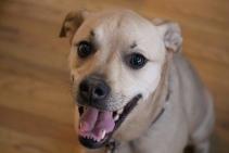 Dogs - Lexi port4