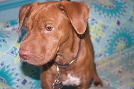 Dogs - Remy port3