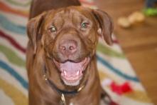 Dogs - Remy port5