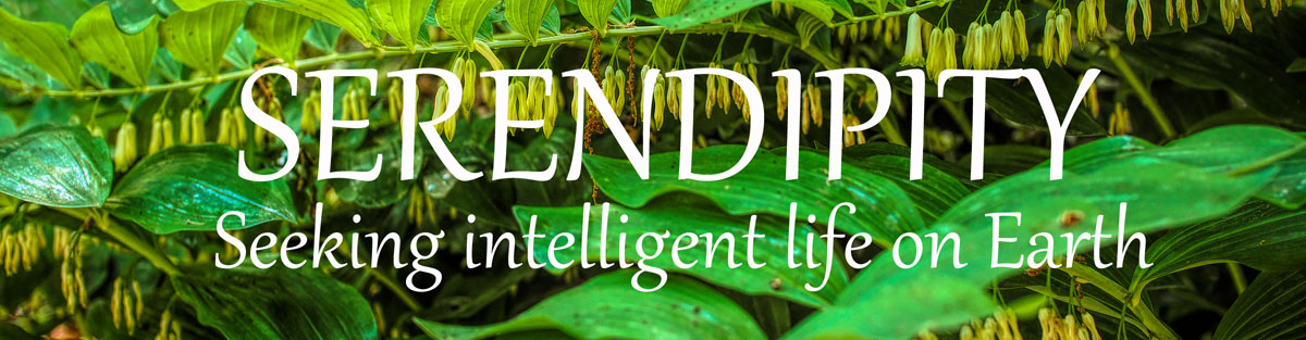 Serendipity – Seeking Intelligent Life on Earth