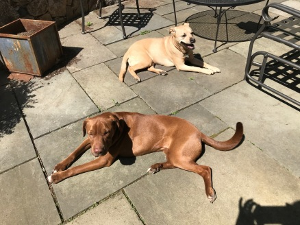 patio - dogs 1A