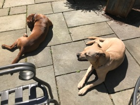 patio - dogs2