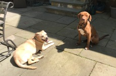 patio -dogs3