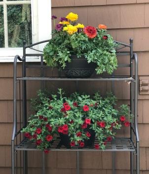 patio - flowers shelves Closeup