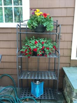 patio - flowers shelves long shot