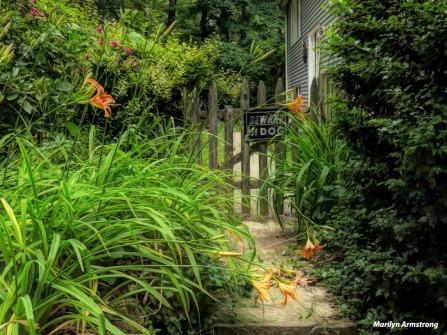 180-Late-June-Garden-240618_068
