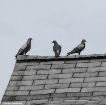 180-Roof-With-Pigeons-Square-Paula-Party_048