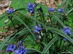 180-Spiderwortr-070618_007-1