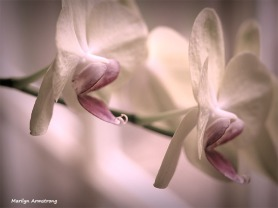300-4-orchids-macro-mar-240618_001.