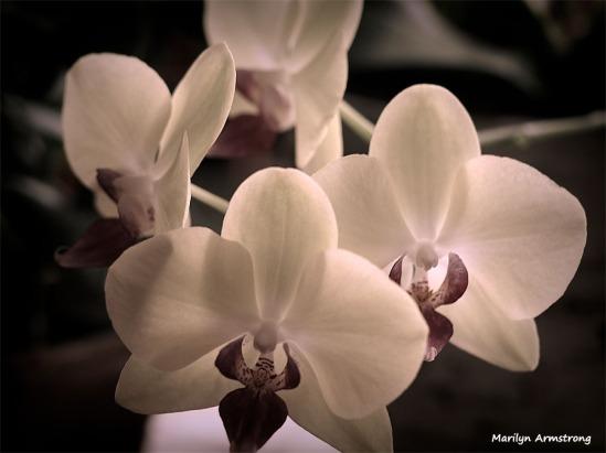 300-4-orchids-macro-mar-240618_014