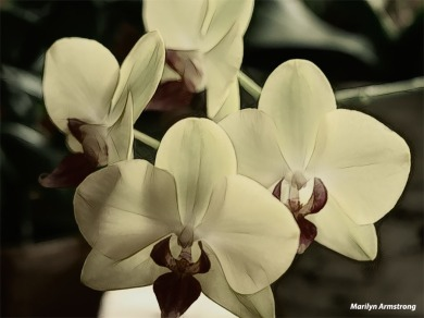 300-4-orchids-macro-mar-240618_014b