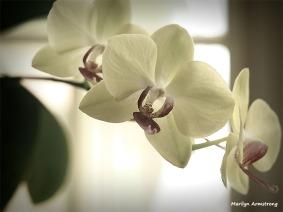 300-4-orchids-macro-mar-240618_023