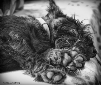Gibb's paws