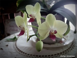 300-Glow-Three-Orchids-Q-170618_051