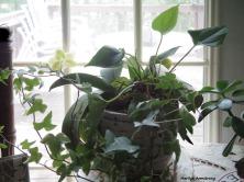300-Line-Art-Orchids-Floral-Pentax-030618_060