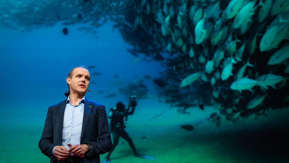 Turning The High Seas Into The World's Largest Nature Reserve