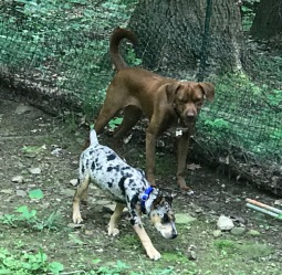 Remy and Houla
