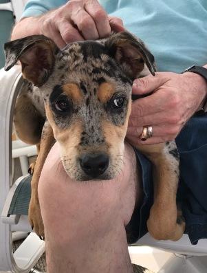 Puppy Visit - tom portrait2