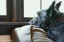 180-Bonnie-Portrait-030716_001